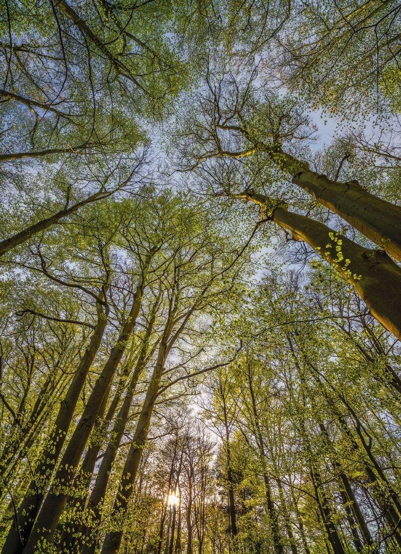 Fototapeta Krajobraz 184x254 4-522 Szwecja Las Drzewa Natura Sztokholm Djurgarden Przyroda