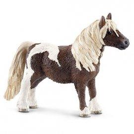 Szetlandzki kucyk, koń