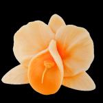 Kwiaty cukrowe - Storczyk opak. 10 szt. herbaciany
