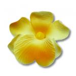 HOKUS - Miltonia 10 szt.  żółta