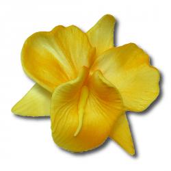 Storczyk opak. 10 szt. żółty