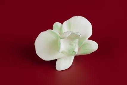 Cymbidium 18 szt. pistacjowe