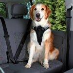 Trixie Szelki samochodowe Dog Comfort dla psa rozmiar XL - 80-100cm/25mm