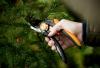 Sekator ręczny nożycowy Fiskars P26 SingleStep 1000567