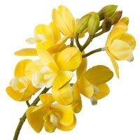 Gałązka Storczyk Żółty Z Białym Środkiem 62cm [ Komplet 4szt ]