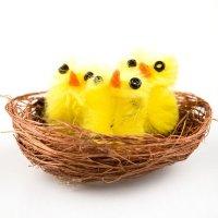 Kurczaki w Gniazdku [Komplet 12szt]