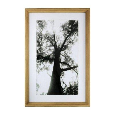 Obraz Natural - Tree