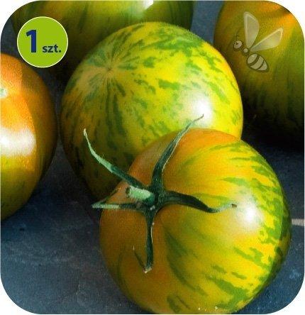 Pomidor szczepiony Triverta