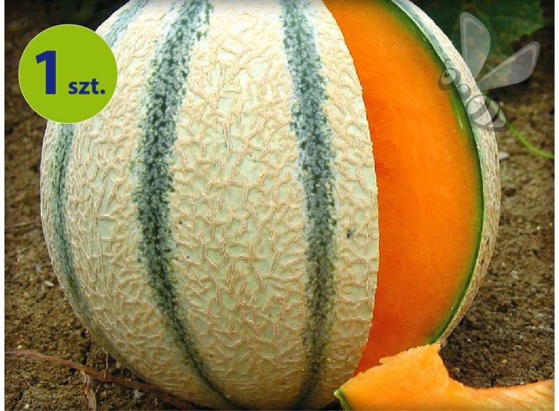 Melon szczepiony Anasta