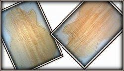 Klon Falisty - Klasa AAAAA Gr.16.3 mmI