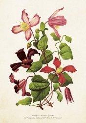 Karnet ST275 B6 + koperta Kwiat klementynki