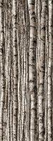 Dekor Szklany 4-elemntowy Birch 239,8x89,8