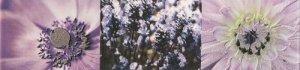 Maxima Violet 2 Listwa 44,8x10