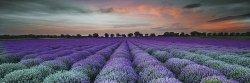 CERAMIKA KOŃSKIE Lavender field glass inserto 25x75 G1. szt