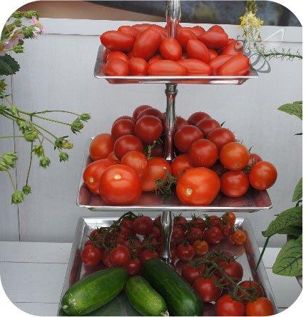 Pomidor szczepiony Aurea