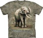 Asian Elephant  - The Mountain