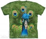 Vibrant Peacock - Paw - The Mountain
