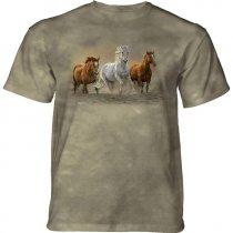 On The Run Horses - The Mountain