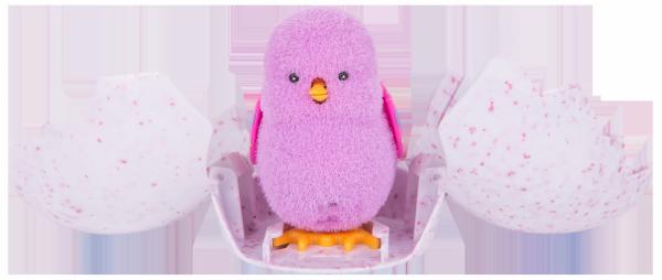 Kurczaczek wykluty