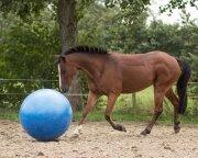 Piłka dla konia 80 cm - QHP
