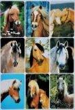 Naklejki ze zdjęciami koni - Herma
