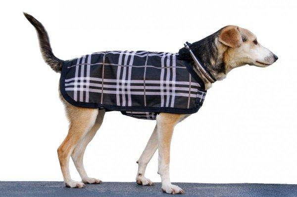 Derka dla psa Eskadron Classic Sports jesień-zima 2017 - navy check
