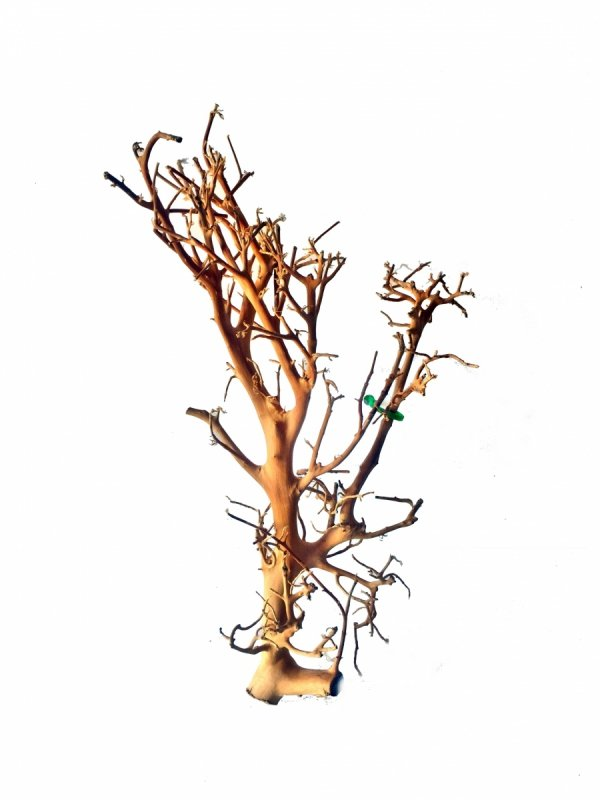 Tantora Korzeń Branch Drift Wood 25-30Cm Piękny Selekcja GRATIS!