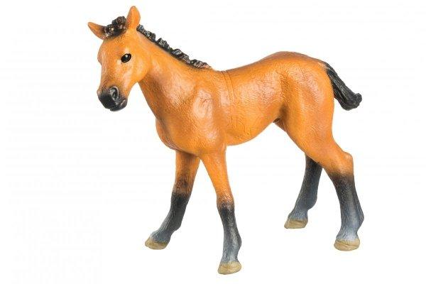Koń 01