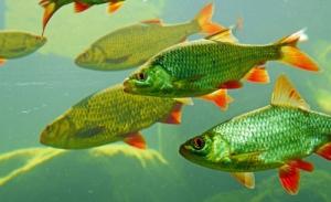 Dla Ryb i na ryby