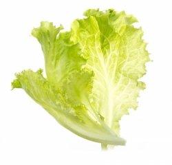 Tregren Lettuce, 2 seed pods, SEEDPOD13