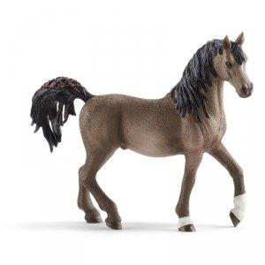 Horse Club Koń Arabski Ogier
