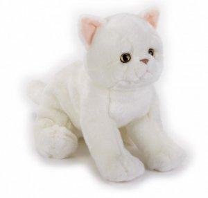 Dante Pluszak Kot egzotyczny National Geographic