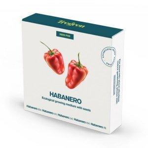 Tregren Habanero, 1 seed pod, SEEDPOD96