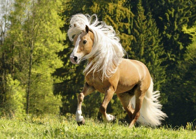 Puzzle 1000 Ravensburger 150090 Radosny Koń