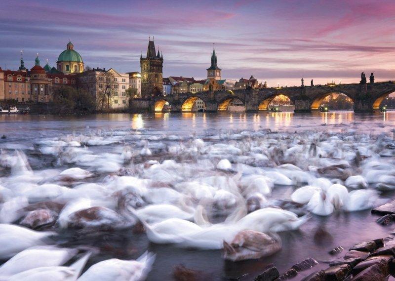 Puzzle 1000 Schmidt 59695 Christian Ringer - Łabędzie w Pradze