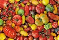 Puzzle Pomidory 1000el.