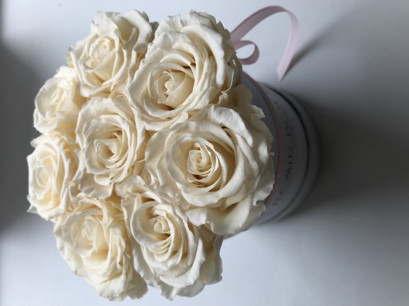 Kremowe żywe WIECZNE  róże w małym białym boxie XS