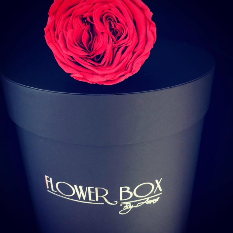 NOWOŚĆ! Czerwone żywe WIECZNE róże -dwa gatunki w dużym czarnym boxie