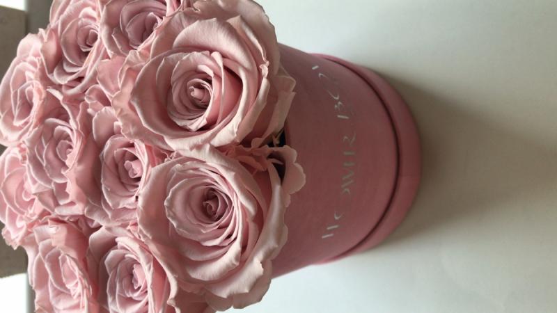 Pudrowo różowe żywe WIECZNE róże w średnim różowym VELVET boxie
