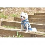Bluza z kapturem w niebieskie moro od Puppia