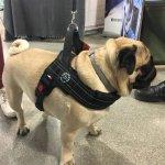 Szelki PRIMO PLUS czarne odblaskowe dla dużego psa