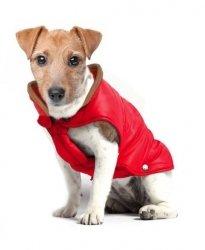 Ciepła kurtka dla Jamnika CAMPUS czerwona