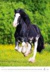 Kalendarz ścienny wieloplanszowy Horses Dreaming 2021 - kwiecień 2021