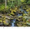Kalendarz ścienny wieloplanszowy Forest 2021 - kwiecień 2021