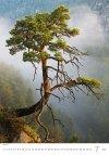Kalendarz ścienny wieloplanszowy Trees 2021 - lipiec 2021