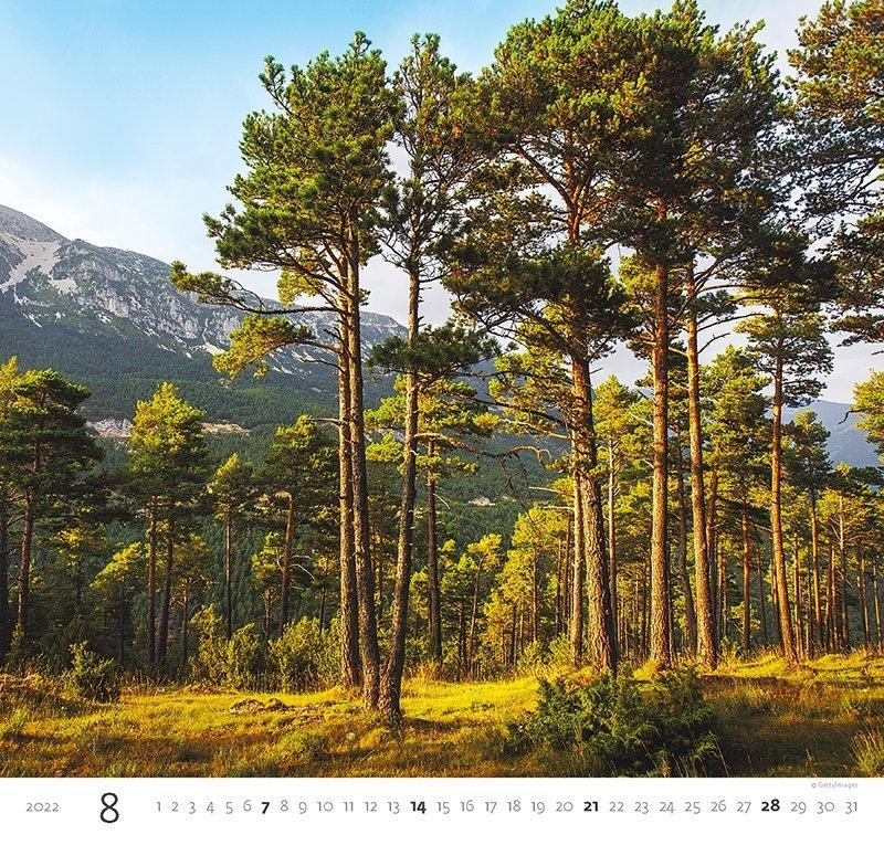 Kalendarz ścienny wieloplanszowy Forest 2022 - sierpień 2022