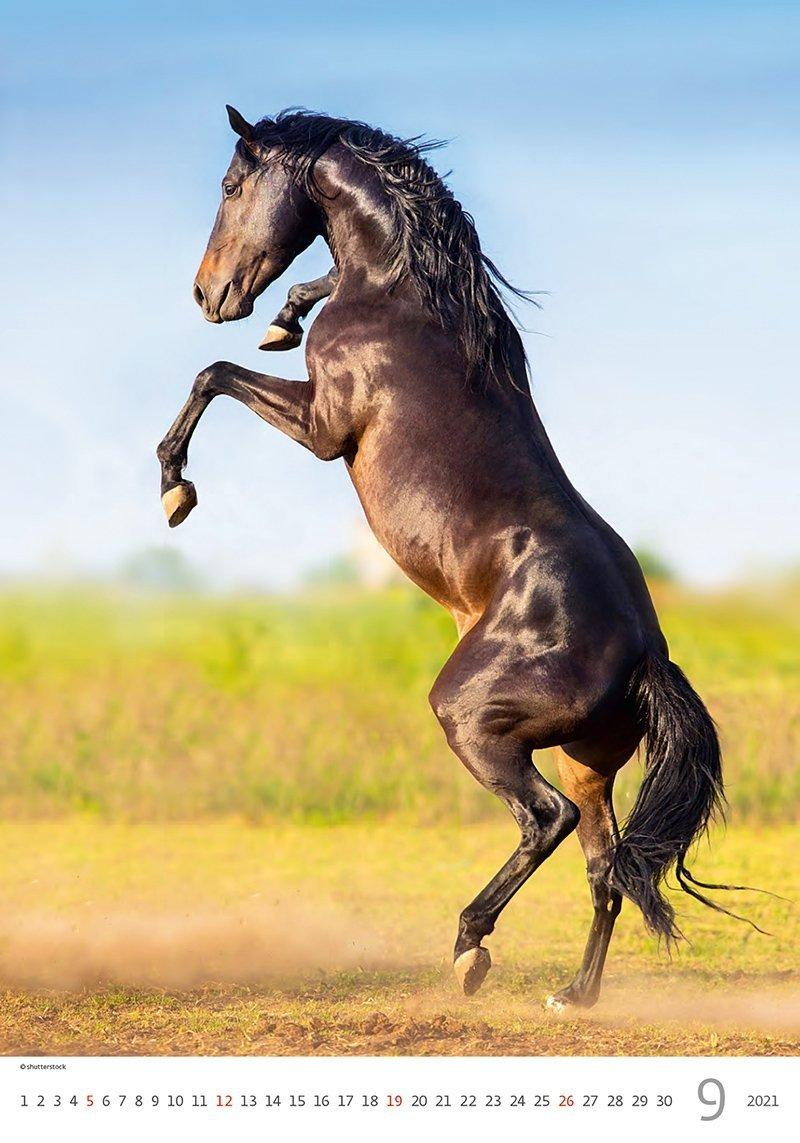 Kalendarz ścienny wieloplanszowy Horses Dreaming 2021 - wrzesień 2021