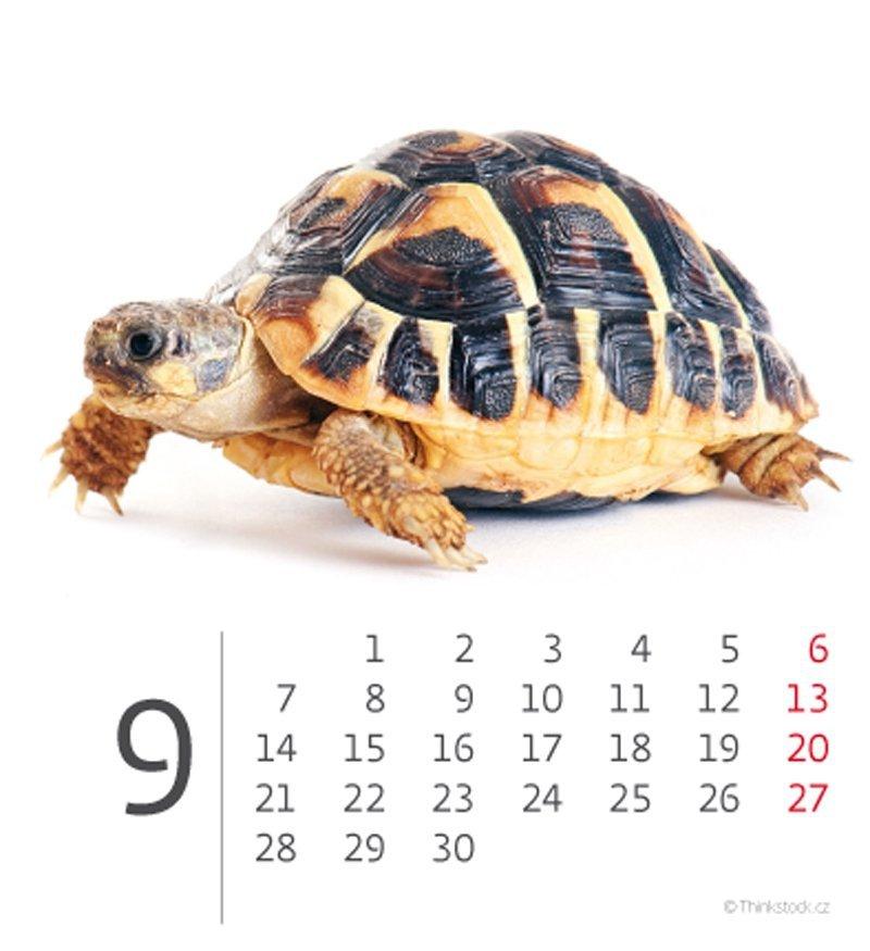 Kalendarz biurkowy mini Zwierzątka 2020 - wrzesień