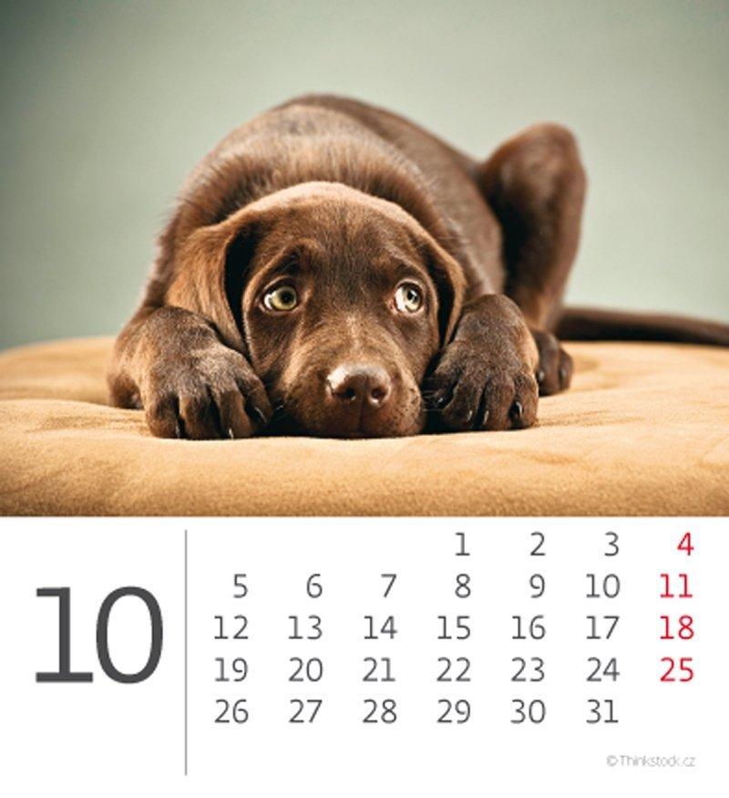 Kalendarz biurkowy mini Pieski 2020 - październik