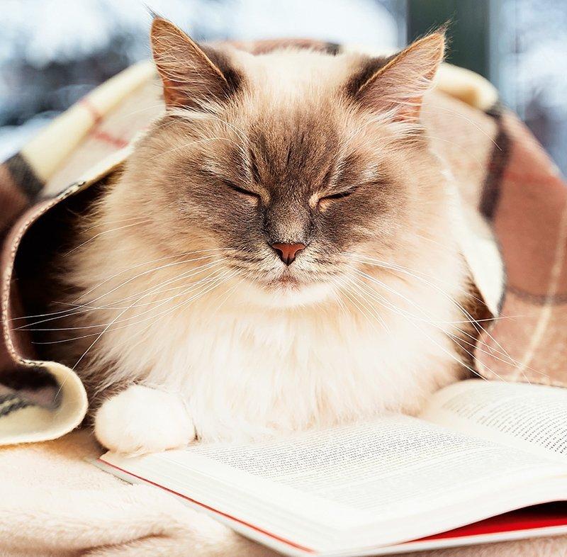 Kalendarz ścienny wieloplanszowy Cats 2022 z naklejkami - grudzień 2022